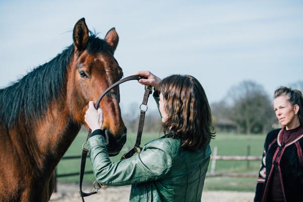 Coaching met paarden Eindhoven