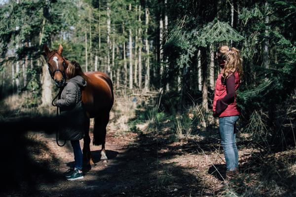 Coaching met paarden Vessem
